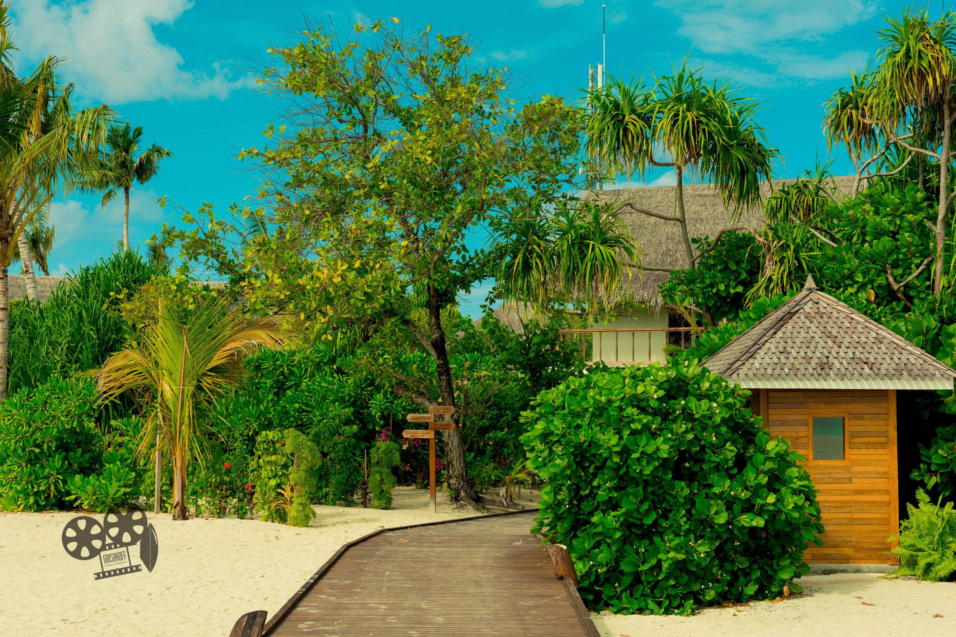 grishkoff, maldives